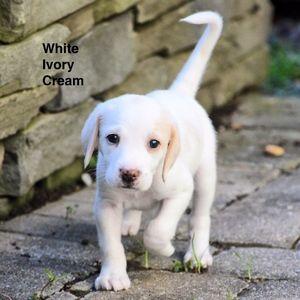 White, Ivory and Cream things